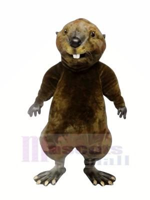 Hoch Qualität Otter Maskottchen Kostüme