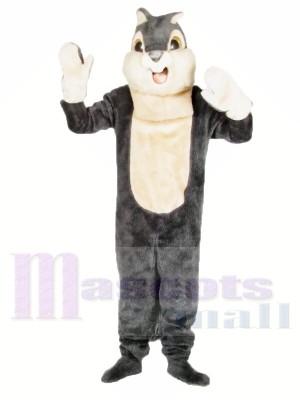 Nettes graues Eichhörnchen Maskottchen Kostüme