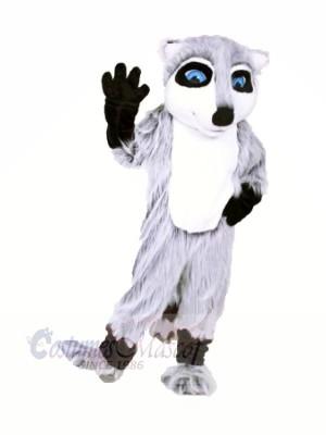 Qualität Waschbär Maskottchen Kostüme Karikatur