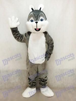 Nettes graues Husky Hunde Maskottchen Kostüm