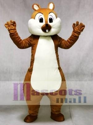 Niedlich Eichhörnchen Maskottchen Kostüme Wald Tier